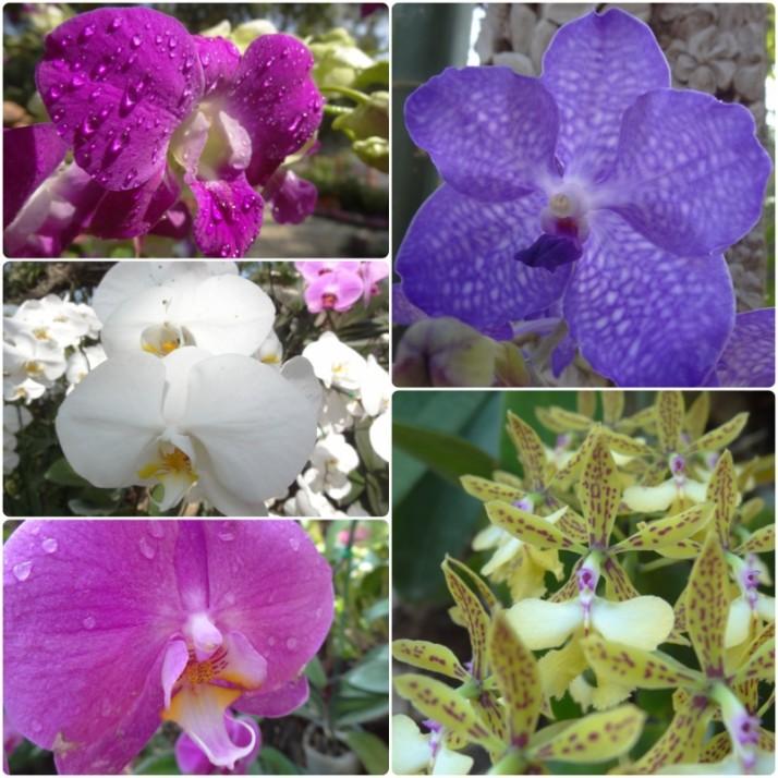 Orchids, Orchids, Orchids..