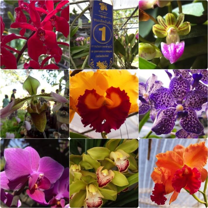 Prize-winning orchid collage