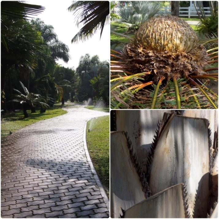 Palm tree garden collage
