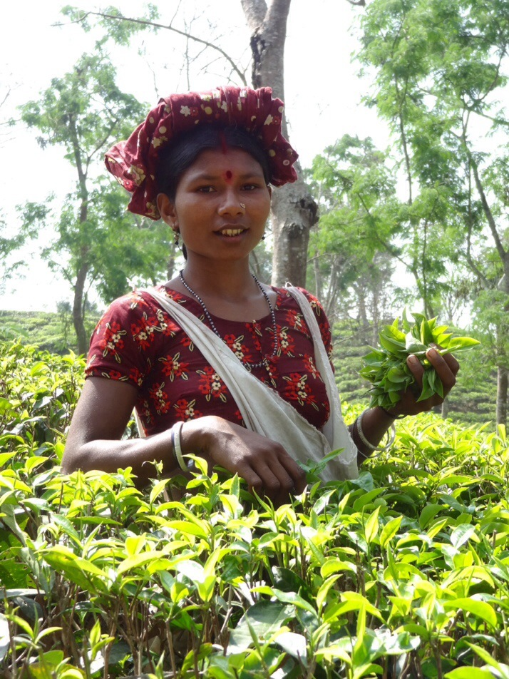Hindu woman picking tea in Srimongol