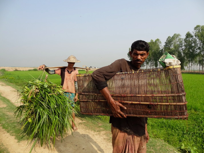 Reed harvester and fisherman