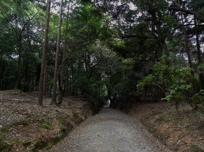 Kasugayama Primeval Forest, Nara-kōen park.. spooky