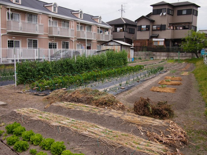 Japanese private gardens and allotments are as well ordered as the public ones