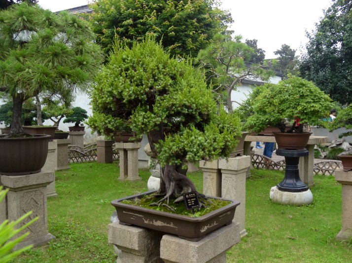 Bonsai trees in the Humble Administrator's Garden