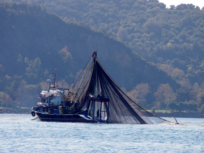 Bosphorus fishing boat