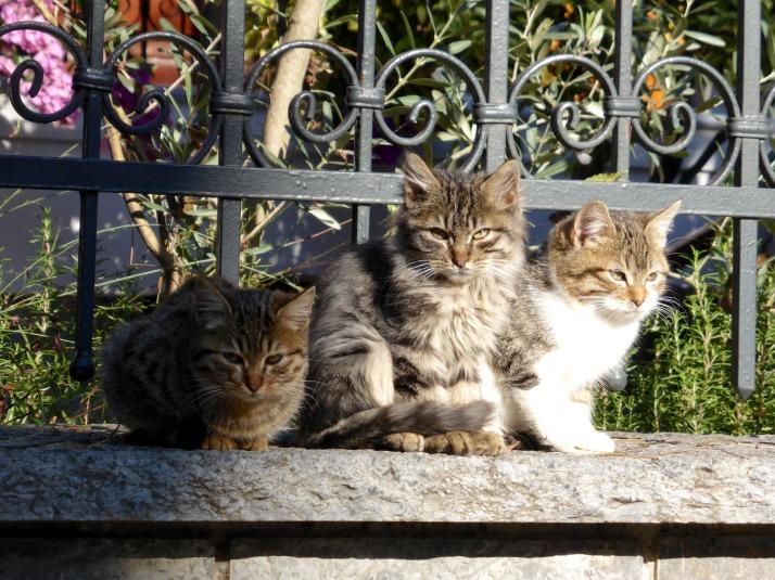 Buyukada cats
