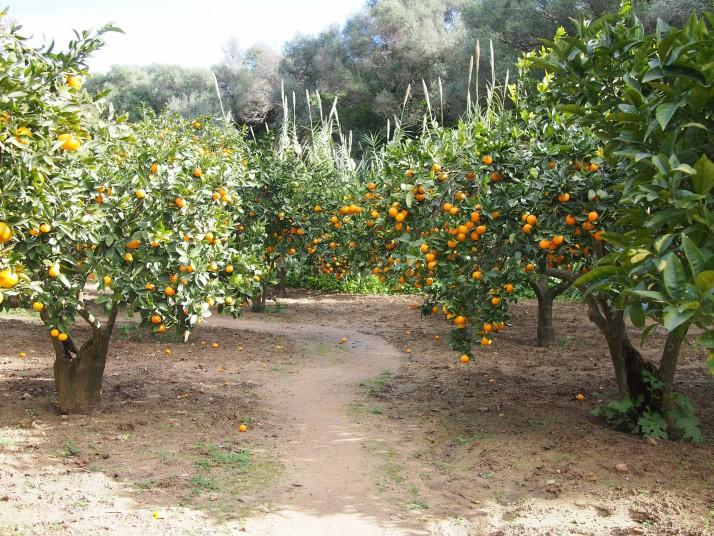 Garden of Kolymbetra