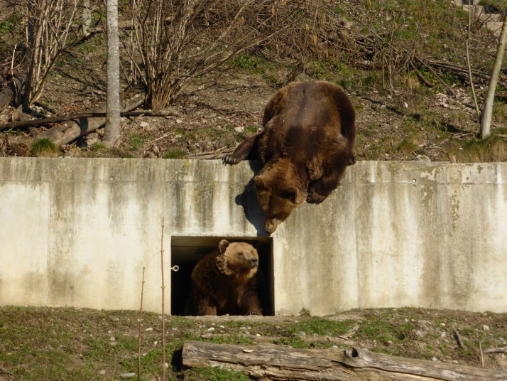 Bern Bears, Switzerland