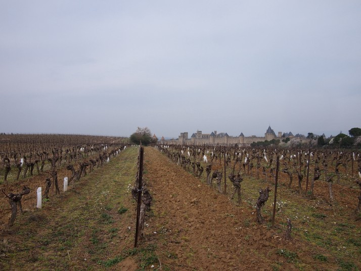 Vineyard near Carcassonne