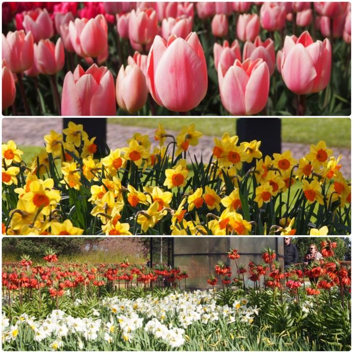 Spring flowers at Keukenhof