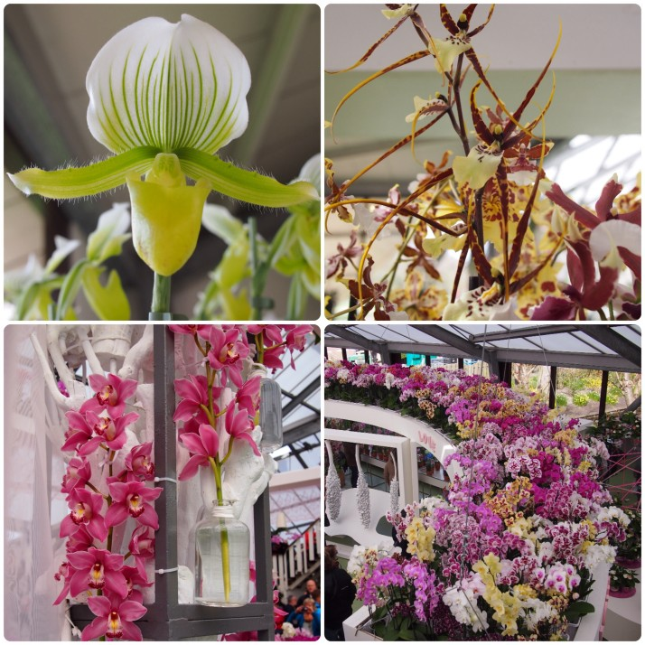 Orchid show at Keukenhof