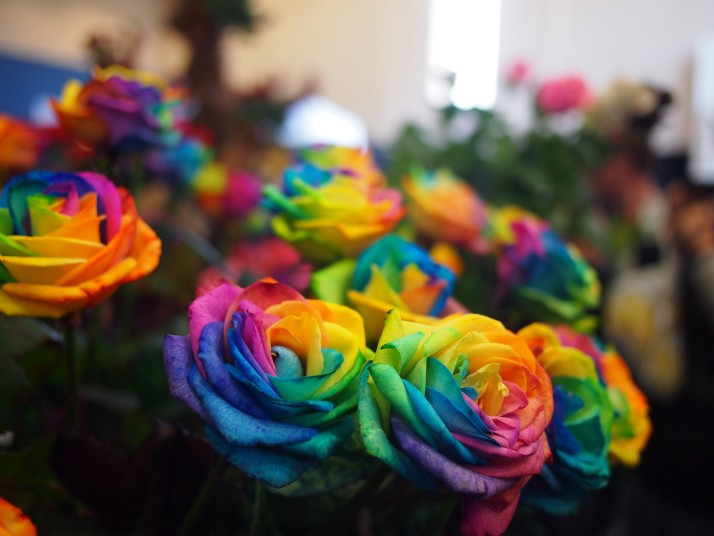 Multicoloured roses