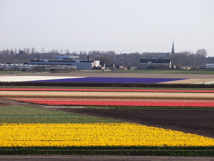 Bulb fields