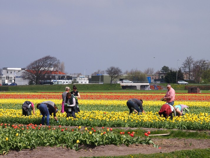 Flower pickers