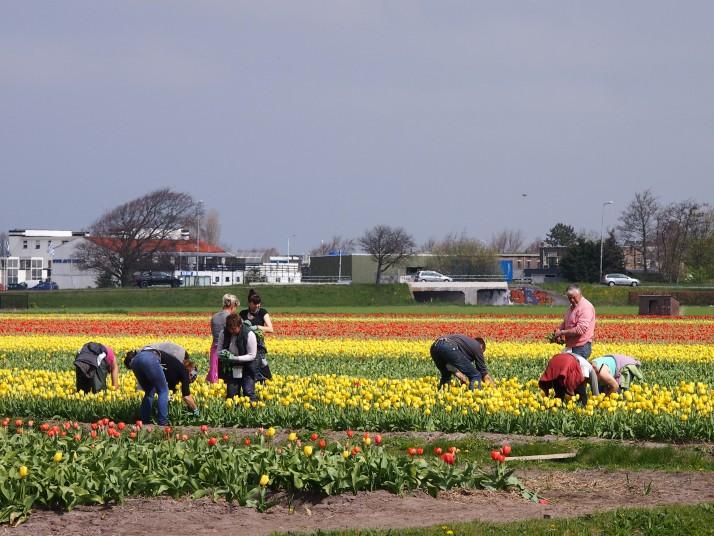 Flower pickers