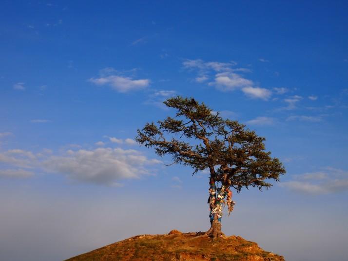 Buryat sacred tree on Olkhon Island
