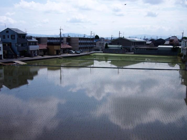 Kyoto rice paddy reflections