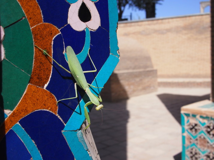Stick insect on tiles at Shah-i-Zinda