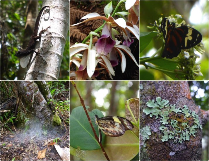 Collage of reptiles, insects and flowers