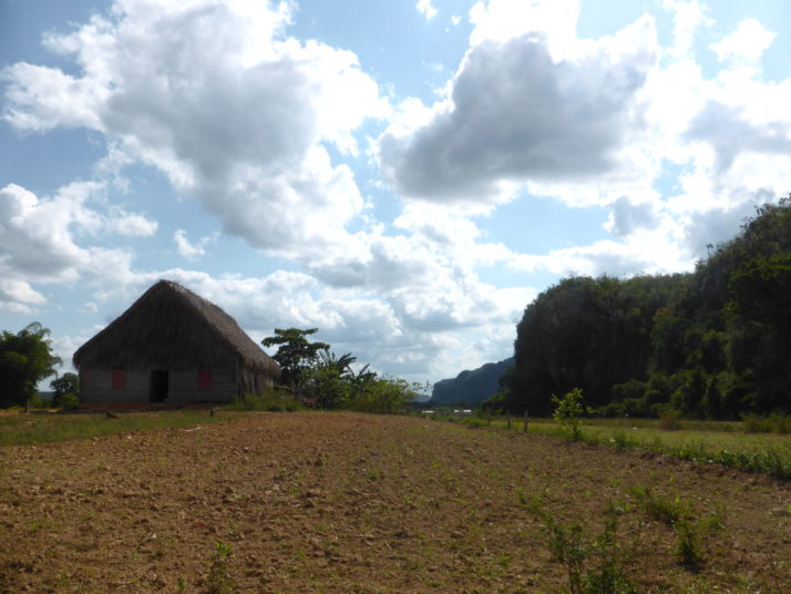 Tobacco drying house and mogote (steep-sided limestone hill), Viñales