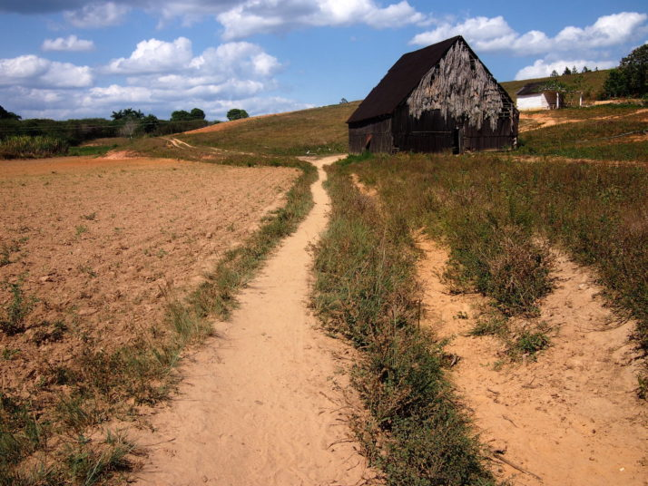A typical trail through the countryside of Viñales - deep red earth and pointed roofs of tobacco leaf drying sheds