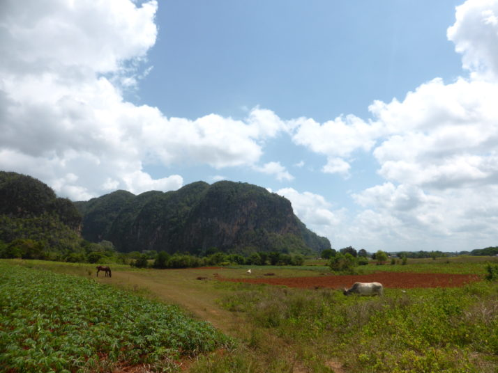 Viñales countryside