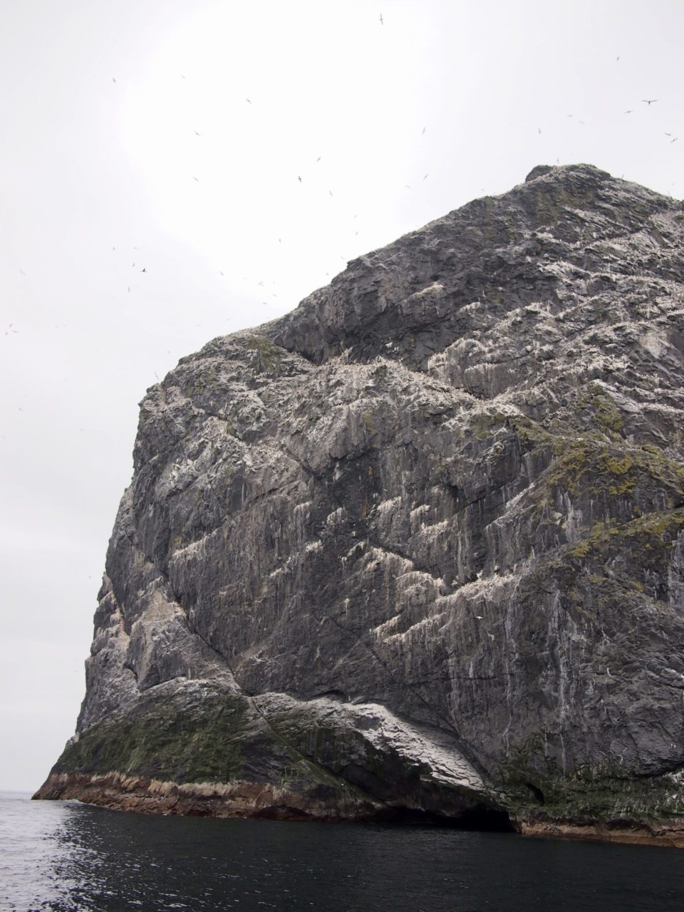 Sea stack with whirling gannets, St Kilda